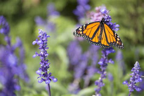 plant  garden butterflies  love modernize