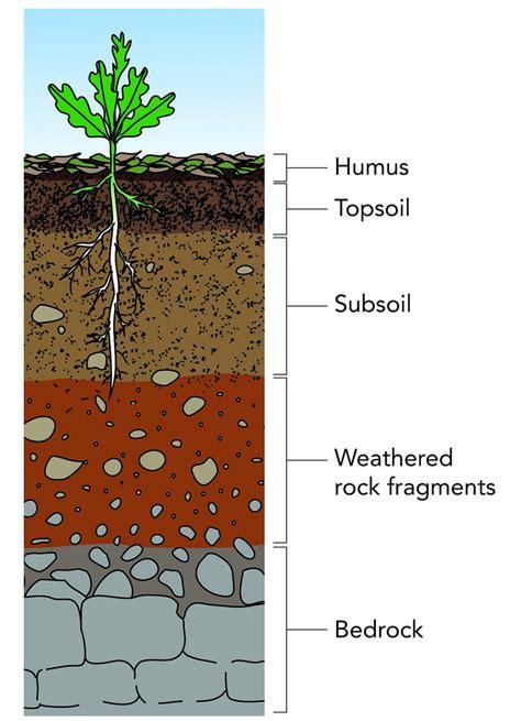 soil horizons diagram diagram for soil science information for science elsavadorla