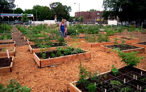 Community Vegetable Gardens 17 Best Images About Community Garden On