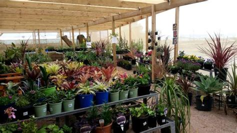 Homestead Gardens by Garden Centre Picture Of Homestead Gardens Port Augusta