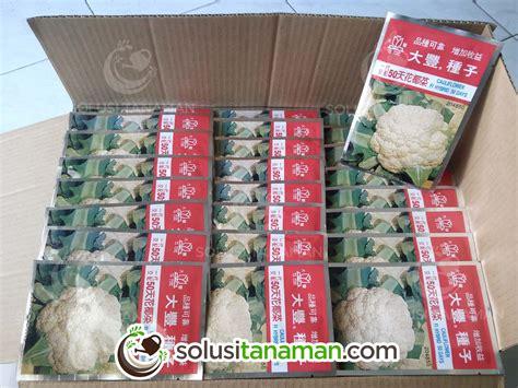 Benih Kembang Kol F1 Repack Bibit Biji Bunga Kol bunga kembang kol 50 f1 10g bibit benih tanaman sayur