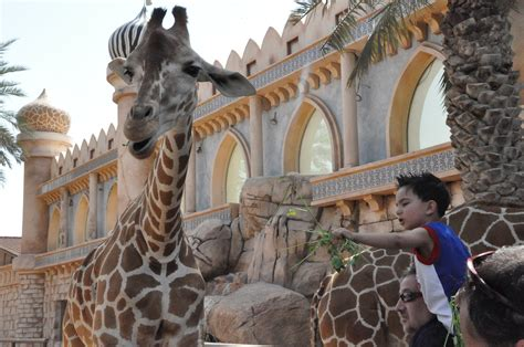 emirates park zoo party at the zoo real housewives of abu dhabi