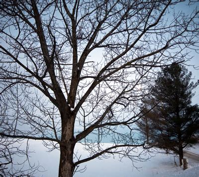 homeowners insurance and dead trees tree trimming in the winter good or bad