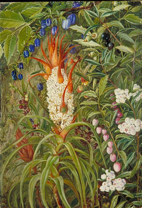 kew marianne north gallery painting 711 berry bearing