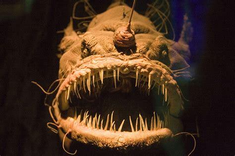 Keset Gambar Ikan 10 hewan aneh gambar malioboro