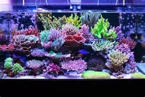 setup a Reef Tank   Reef Builders   The Reef and Marine Aquarium Blog