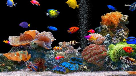 wallpaper colorful fish and interactive water fish wallpaper and background image 1366x768 id 475698