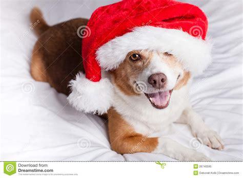 merry puppy merry