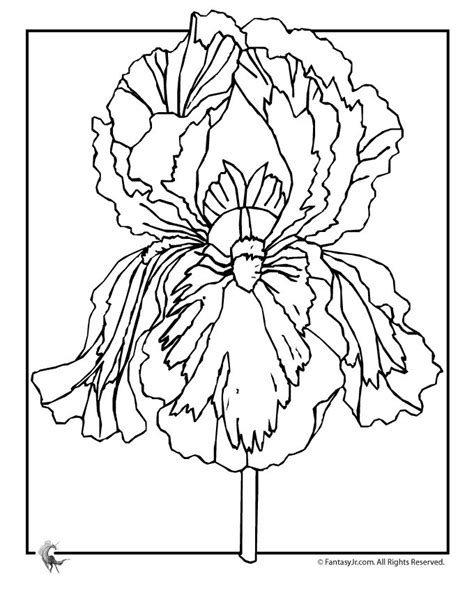 coloring pictures of iris flowers 71 best images about coloring pages on pinterest