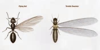 Small Black Ants In Bathroom - termites reliable exterminators