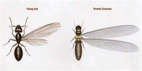 flying ants in house swarming termites what you need to know the bug blog by cayce exterminating
