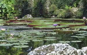 The Lotus Pond Lotus Pond