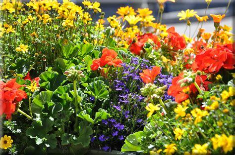 foto fiori per desktop sfondi per desktop i fiori sfondo 020