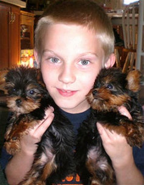 boy teacup yorkie names vianny willies teacup yorkie puppies