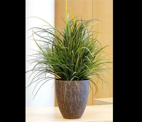 Plante D Extérieur 6307 by Les Plantes D Int Rieur D Polluantes Of Plantes D