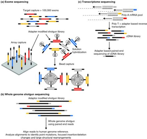illumina whole genome sequencing general schema for targeted exome capture whole genome