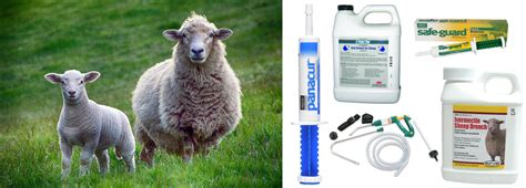best dewormer sheep useful articles about sheep