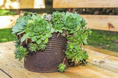 unique planters for succulents creative containers for succulents using interesting