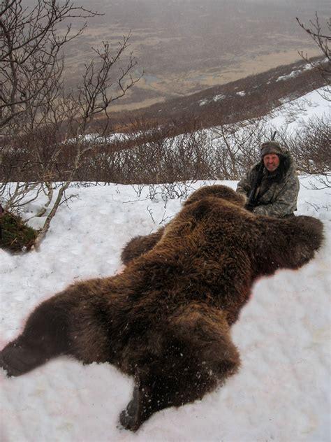 alaska brown bear hunting guided bear hunts