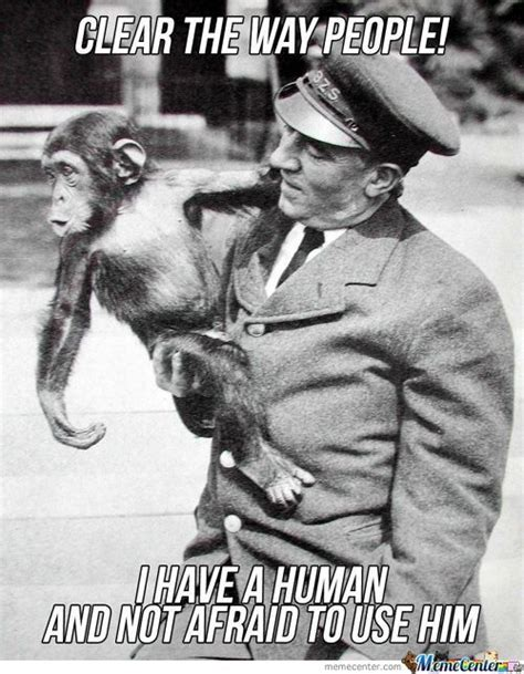 Chimp Meme - chimpanzee memes best collection of funny chimpanzee pictures