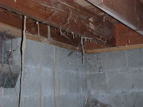 Termite Tunnels Hanging From Ceiling by Signs Of Termite Infestation Termite Infestation Pictures