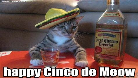 Meme Cinco De Mayo - happy cinco de mayo 2016 all the memes you need to see