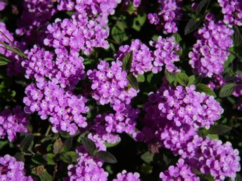 bloemen stoelinga vaste planten assortiment bloemisterij stoelinga