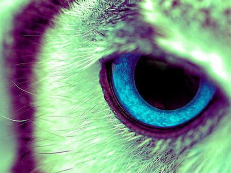 imagenes sorprendentes de ojos los b 250 hos no pueden mover los ojos factoides