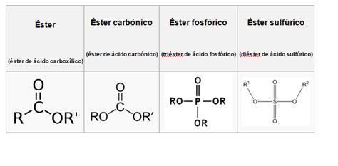 ester fosforico 225 cido fosf 243 233 steres