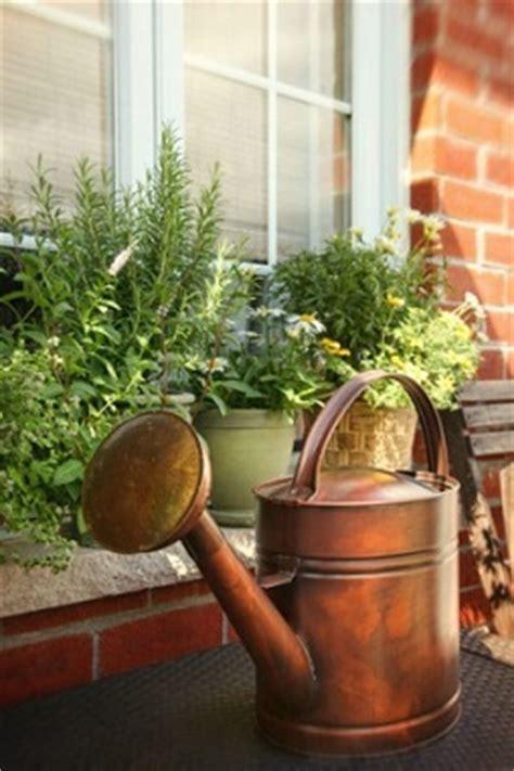 windowsill herb garden grow culinary herbs