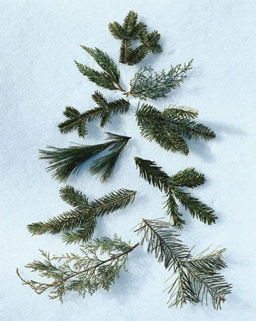 how to pick out a christmas tree boughs up close