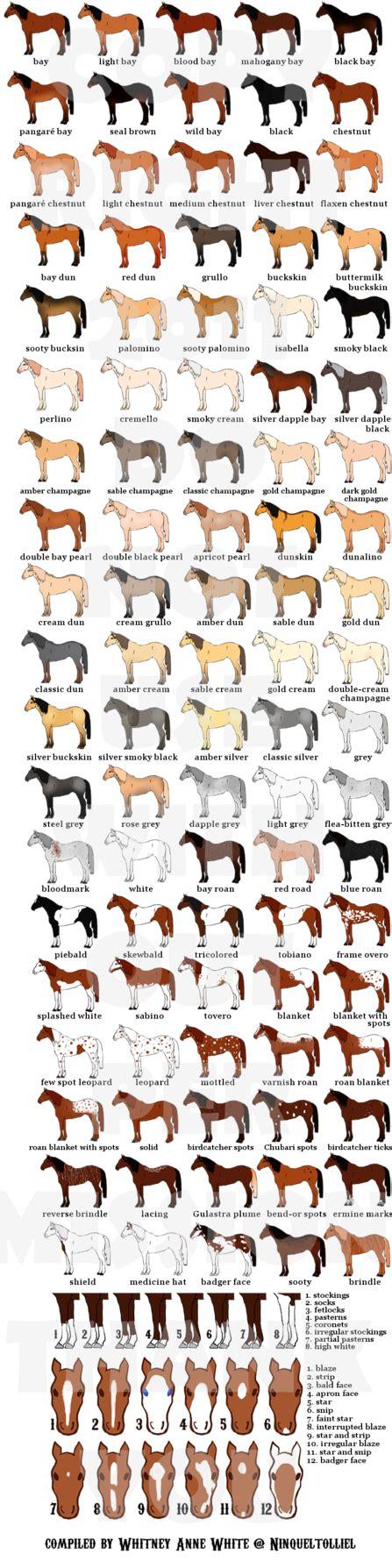 color pattern names horse colors patterns by ninquetolliel on deviantart