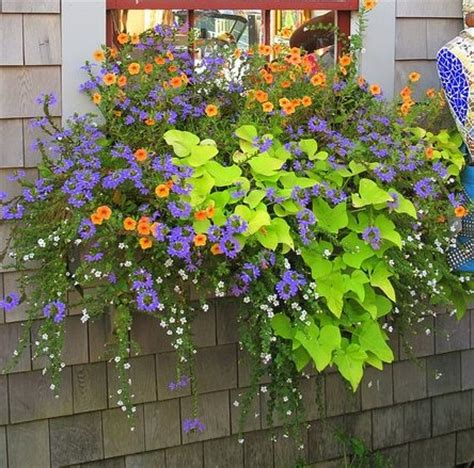 flowers for window boxes in partial shade fibermania container garden