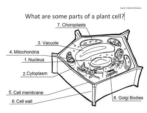 printable animal and plant cell diagram animal and plant cell anatomy homeschool pinterest