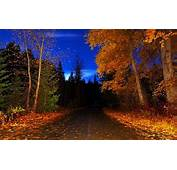 OLD COUNTRY ROAD  Forests &amp Nature Background Wallpapers