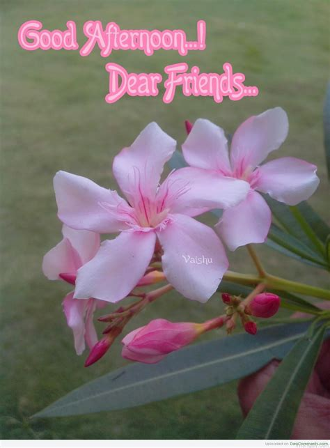 good afternoon wishes  friends wishes  pictures  guy
