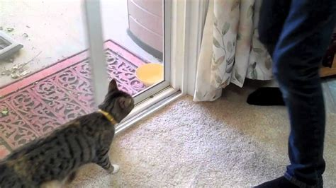 cat runs into door my cat running into screen door hd
