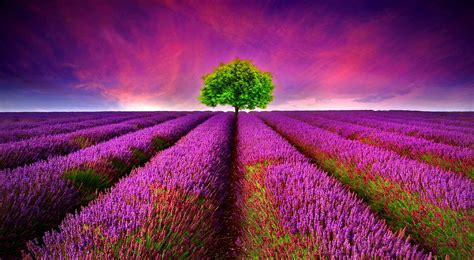 Free Beautiful HD 3d Nature Wallpaper For Computer and