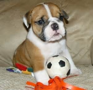free puppies columbia sc pets columbia sc free classified ads