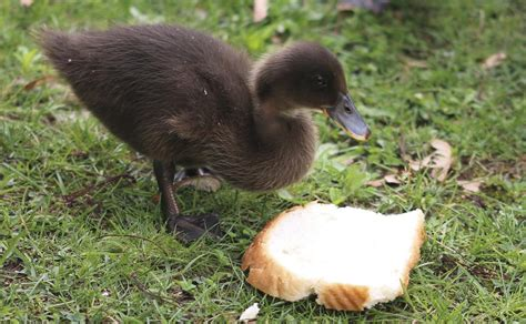 common bird feeding myths busted the truth unraveled