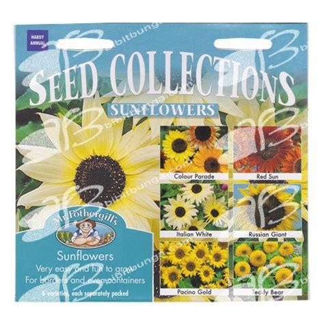 Bibit Biji Benih Bunga Italian White Sunflower Matahari benih sunflower collection mr fothergills bibitbunga