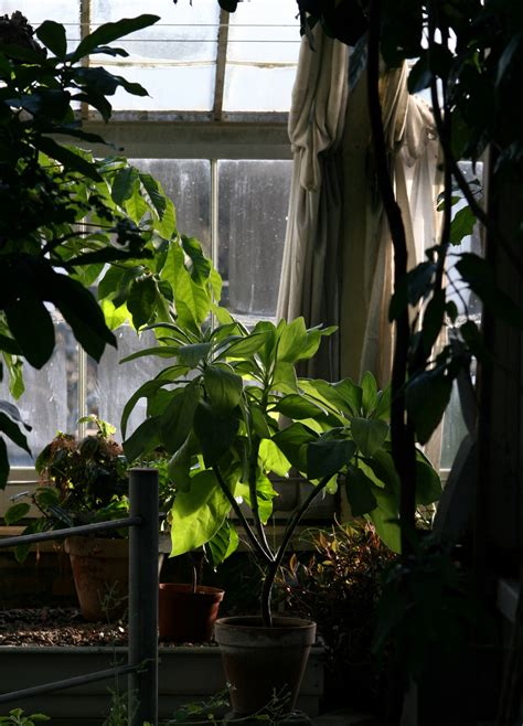 low light house trees house plants low light xanthurium indoor plants 80hp 14
