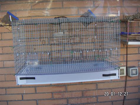gabbie per uccelli fai da te aiutatemi pls piccoli uccelli da gabbia e da voliera 3