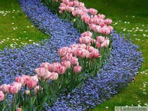 ideas for planting tulips to create dazzling accents and borders in spring gardens