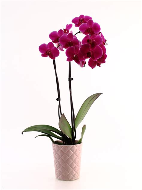 orchid care gets simpler with text message watering reminders