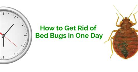 how to get rid of bed bugs in one day erdye s pest