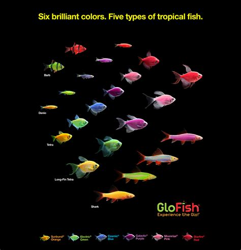 glofish colors glofish 174 the most colorful pets for the most dazzling