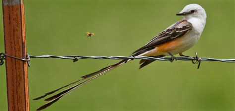 birding and bird watching in oklahoma travelok com