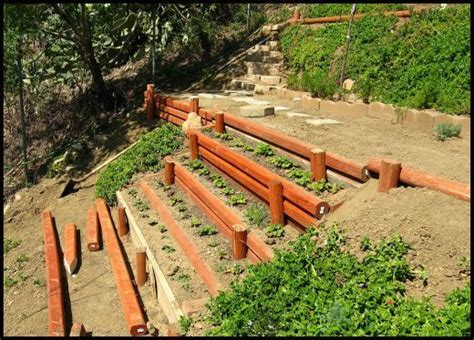 terracing a sloped backyard veggie garden to replace ugly slope ground cover backyard ideas pinterest