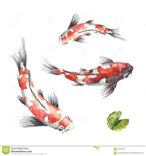 koi fish  white background stock vector image